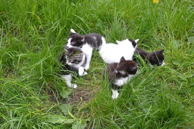 pets classifieds in east of england