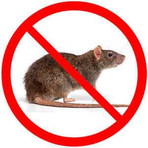 Pestcontrol cheap and reliable